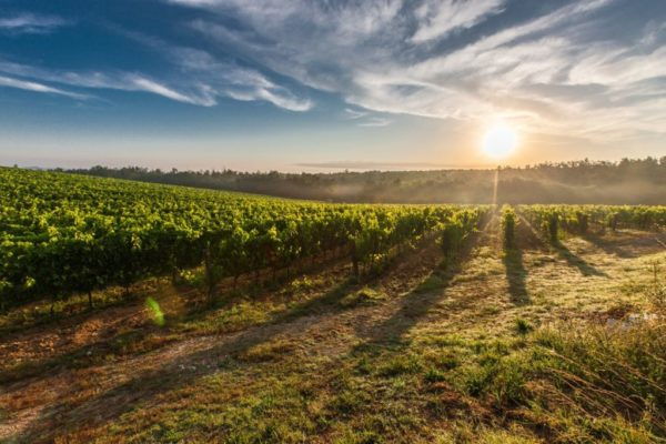 Take a roadtrip on a newly tarred road through the majestic Hemel en Aarde valley on Route 320. On this route you will find many vineyards and restaurants.  Visit route320.co.za for more information