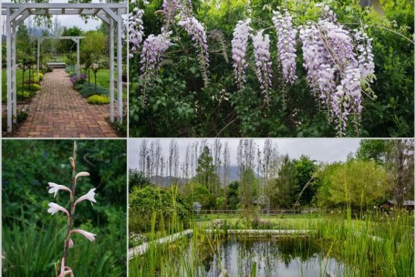 MM Garden 1